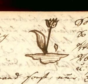 Krafft, Isaak Christian (1727-1791) Tagebuch, Tulpe 1762, AEKR 8SL 046 (Bildarchiv)_80038;