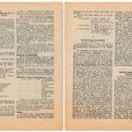 Womit beschäftigten sich die Damen des Deutschen Evangelischen Frauenbundes?